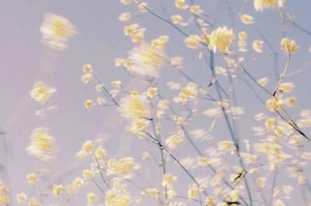 Alec McKee Flowers